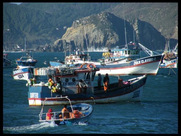 Los pescadores de Lebu esperan la marea para dejar sus productos. | Alfredo Robles