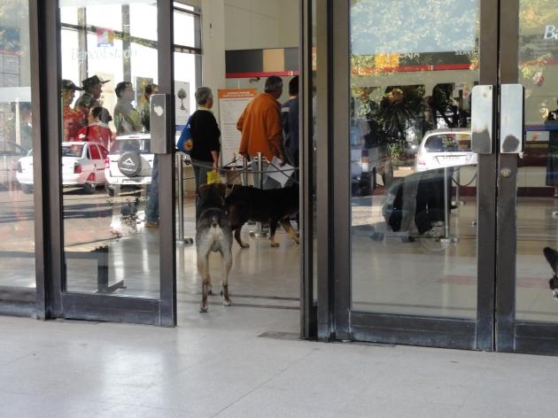 Quirihue lidia con presencia de perros abandonados | Israel Parra