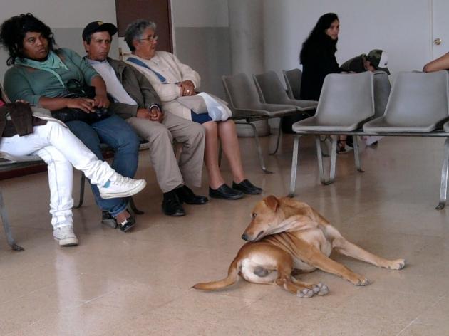 Perro dentro de Consultorio de Hijuelas | Herman Bravo Tobar