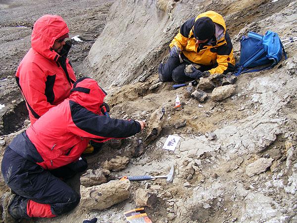 Extracción de fósiles en Antártica | Inach.cl