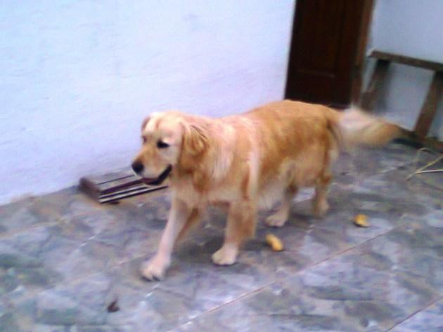 Situación actual de la perra Laika tras su recuperación