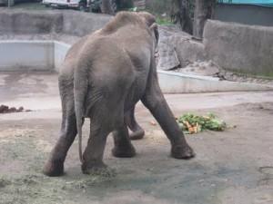Elefanta Frida | Prensanimalista
