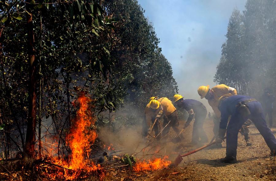 Incendio forestal | ARCHIVO| Maribel Fornerod | Agencia UNO
