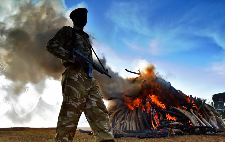 Queman toneladas de marfil en Kenia   Carl De Souza   AFP