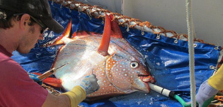 NOAA Fisheries West Coast