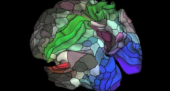 La imagen muestra de una parcelación de 180 áreas en el córtex  humano.