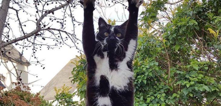Goal Kitty