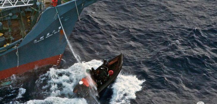 Sea Shepherd | seashepherd.org