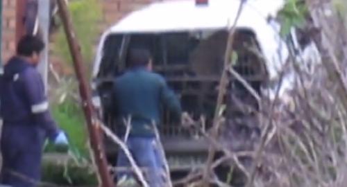 Maltrato en canil de Temuco | Captura de pantalla