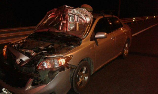 Fatal atropello se registró esta noche en la ruta Concepción-Cabrero