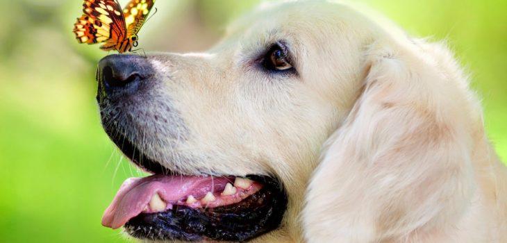 Alergia en perritos | petwantsindy.com