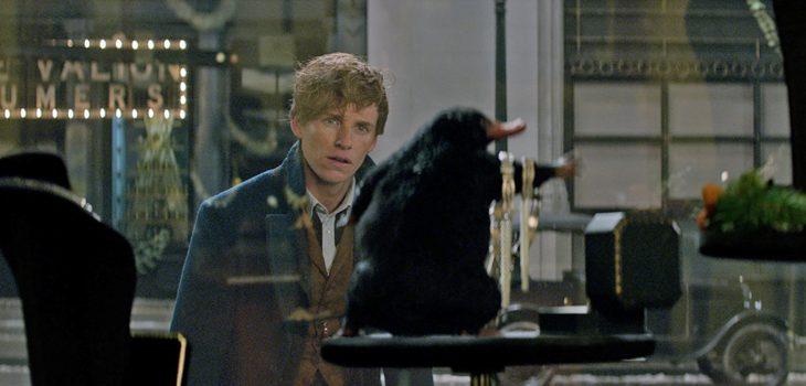 """Escarbato de Newt en """"Animales fantásticos y dónde encontrarlos"""""""