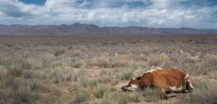Y Todo El Cielo Cupo En El Ojo De La Vaca Muerta | Facebook