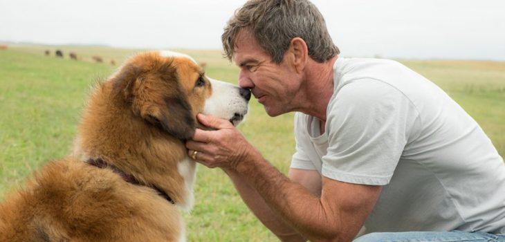 Universal | A Dog's Purpose