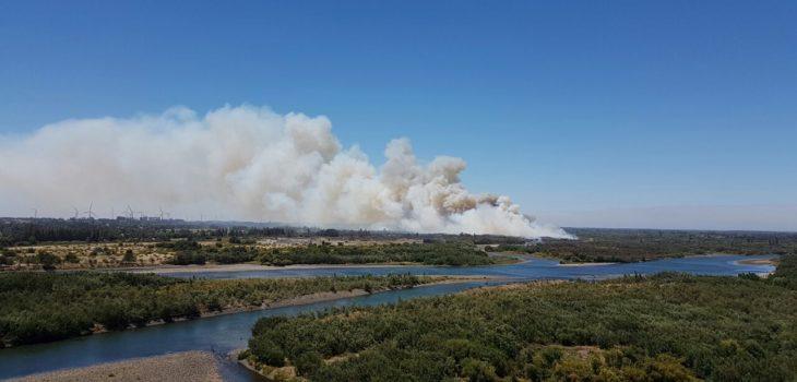 Incendio en Negrete | José Hernández