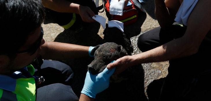 rescate de perrito tras incendio en valparaíso