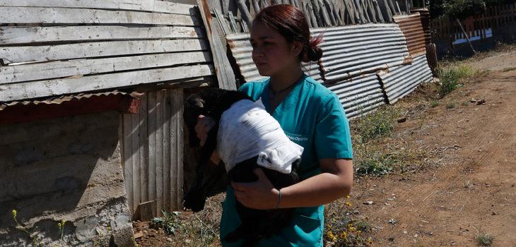 rescate de perrita tras incendio en Valparaíso