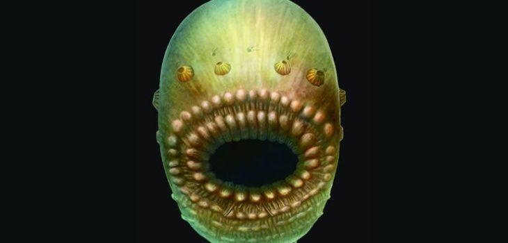 Saccorhytus | S.Conway Morris.Jian Han