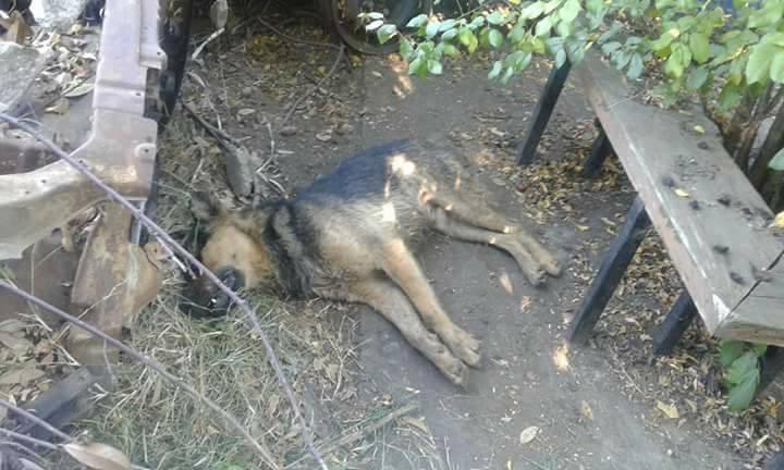Perros muertos en Hualqui