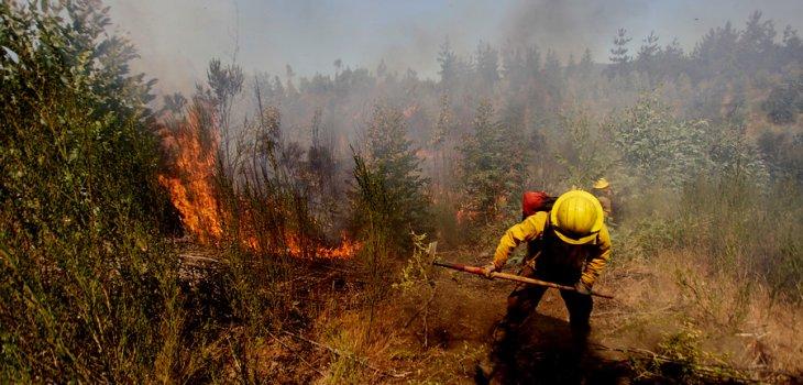 ARCHIVO   Incendios Forestales   Agencia UNO