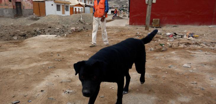 ARCHIVO | Pablo Vera Lisperguer | Agencia UNO