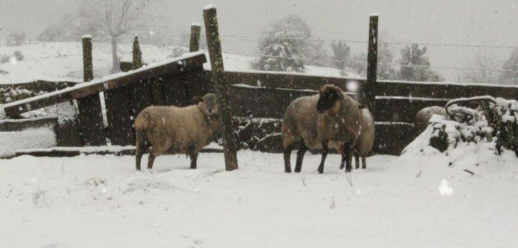 Nieve en Los Ríos   @Ezze_Claudio