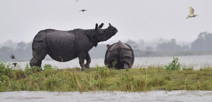Biju Boro | AFP