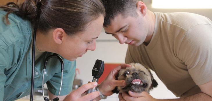 Army Medicine   Flickr (CC)