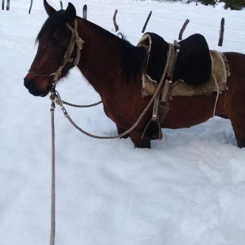 aislados-nieve4