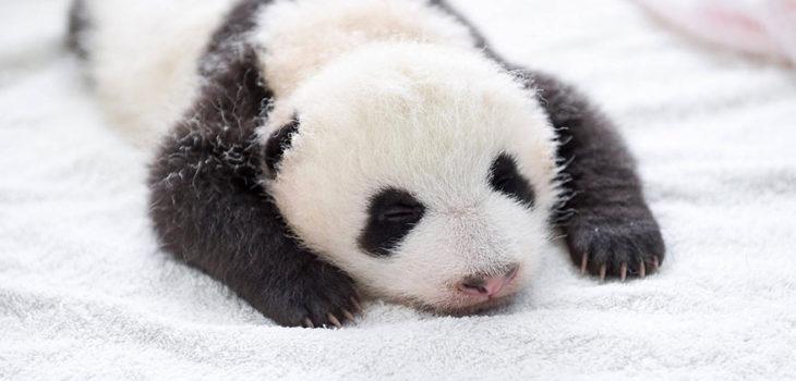Archivo | Bored Panda