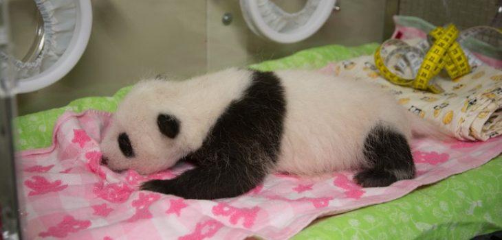 Contexto | AFP PHOTO | Tokyo Zoological Park Society