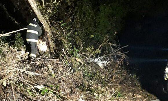 Caída de árboles en Carretera Austral   Cedida