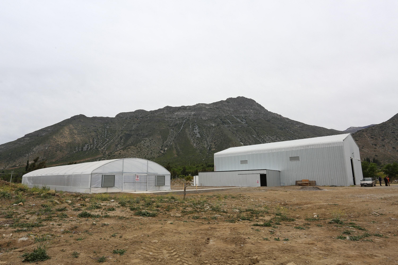 Nuevo invernadero de Cooperativa Agrofrutícola Chillepín | Indap