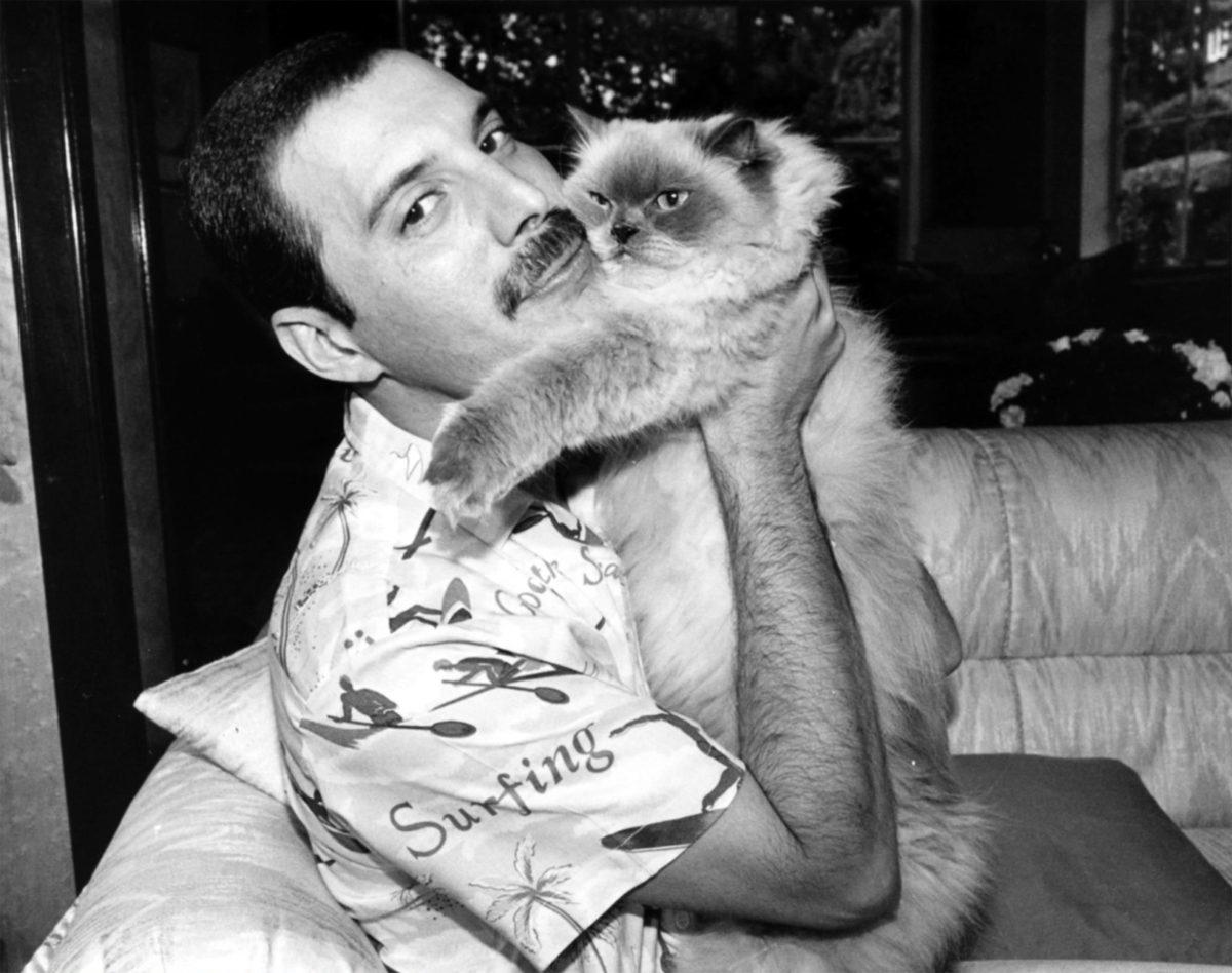 Freddie y uno de sus gatos