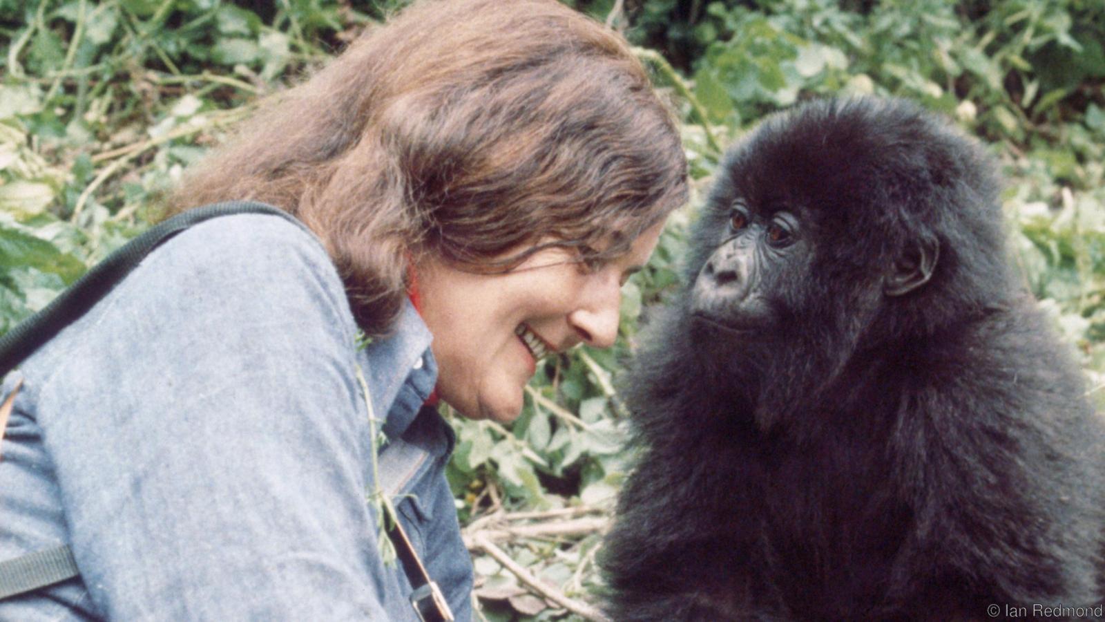 Dian Fossey - notitarde