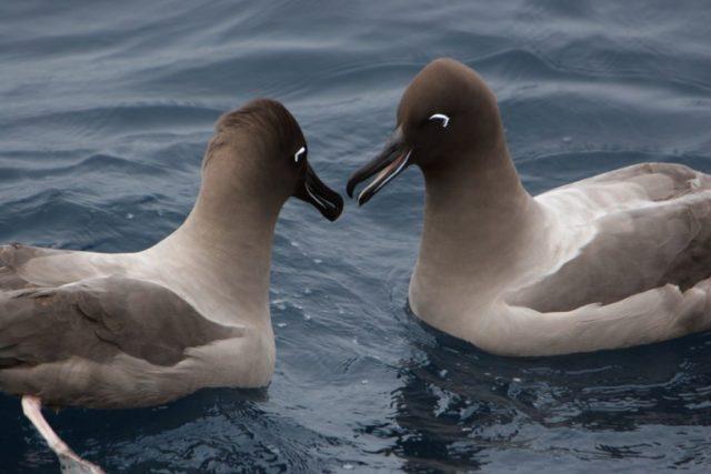 ARCHIVO | Albatros | www.greenpeace.org