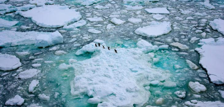 Pingüinos adelaida en la Antártica | www.greenpeace.org