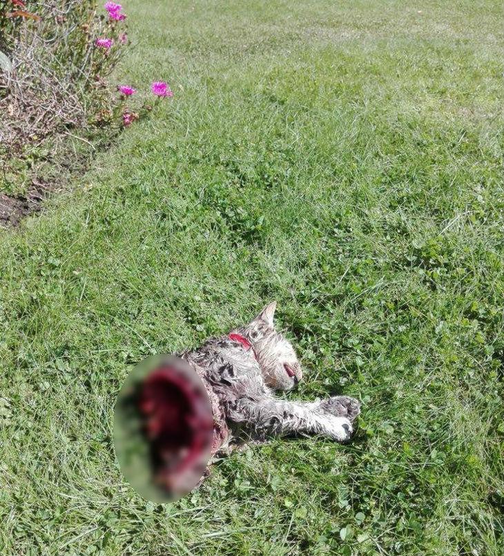 Gato mutilado | Vecinos Lonco Oriente