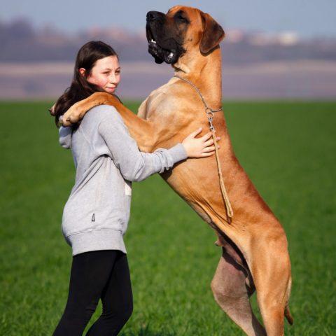 perro-personal
