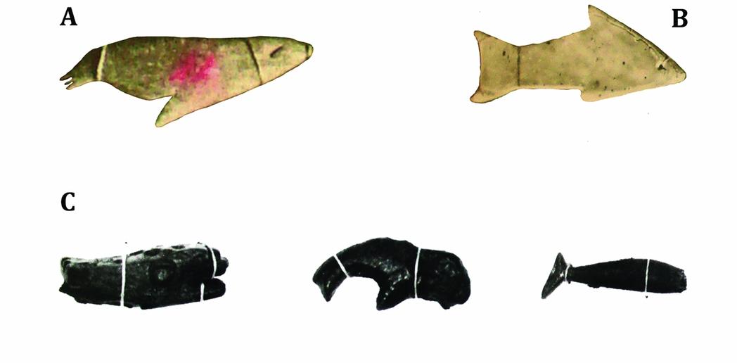 Lobos marinos, tiburones y algunos tipos de ballenas | Francisco Gallardo | Antiquity