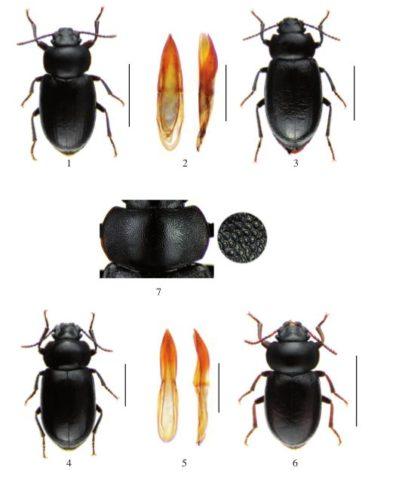 Revista Chilena de Entomología