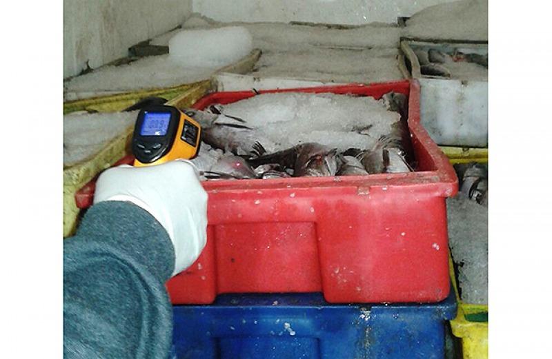 Pescado siendo fiscalizado.