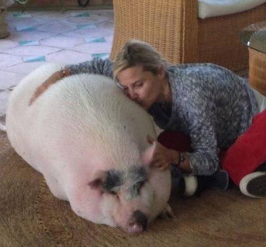 Molly Pig
