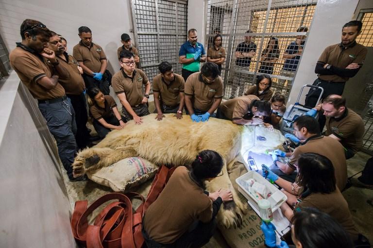 Wildlife Reserves Singapore | AFP