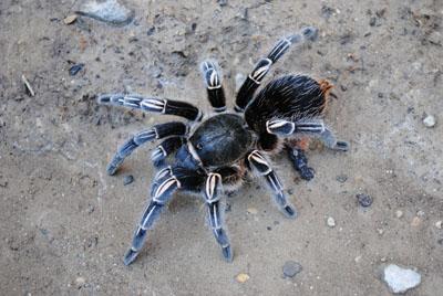 Krazy 8 Invertebrates