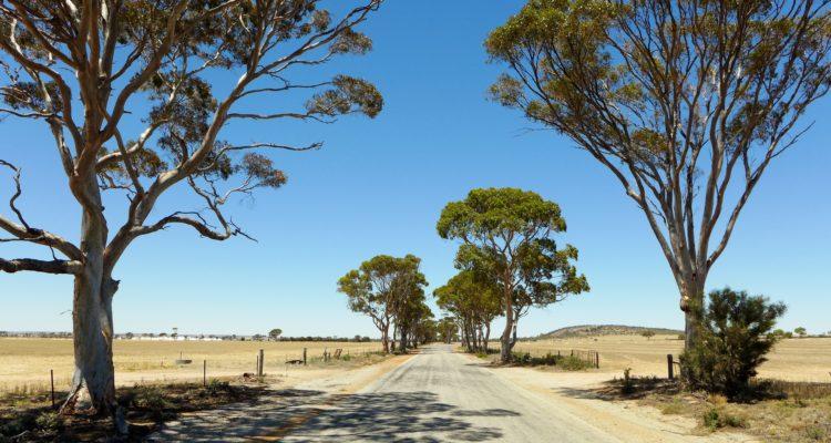 Wheatbelt, Australia | WikiCommons