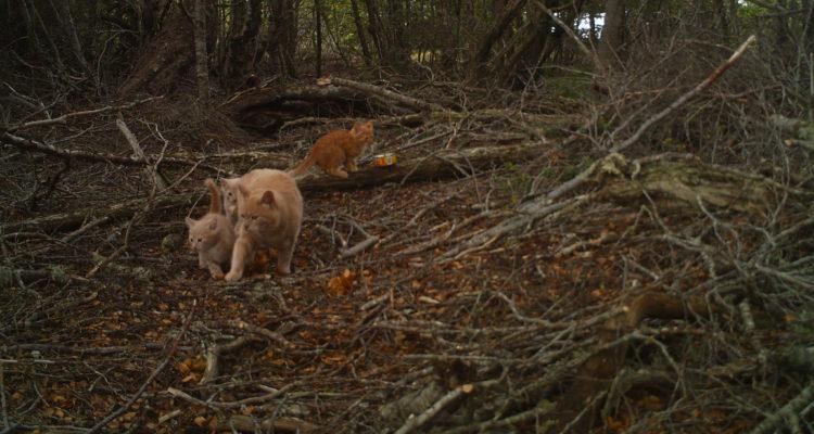 Gatos | Elke Schüttler