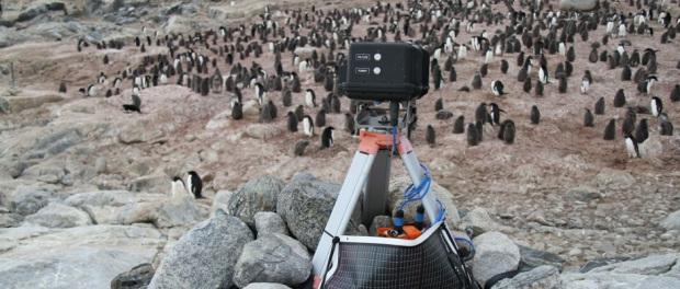Cámara usada para espiar a los pingüinos