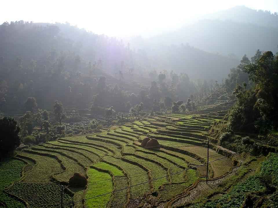 Terrazas de arroz en Nepal | Max Pixel