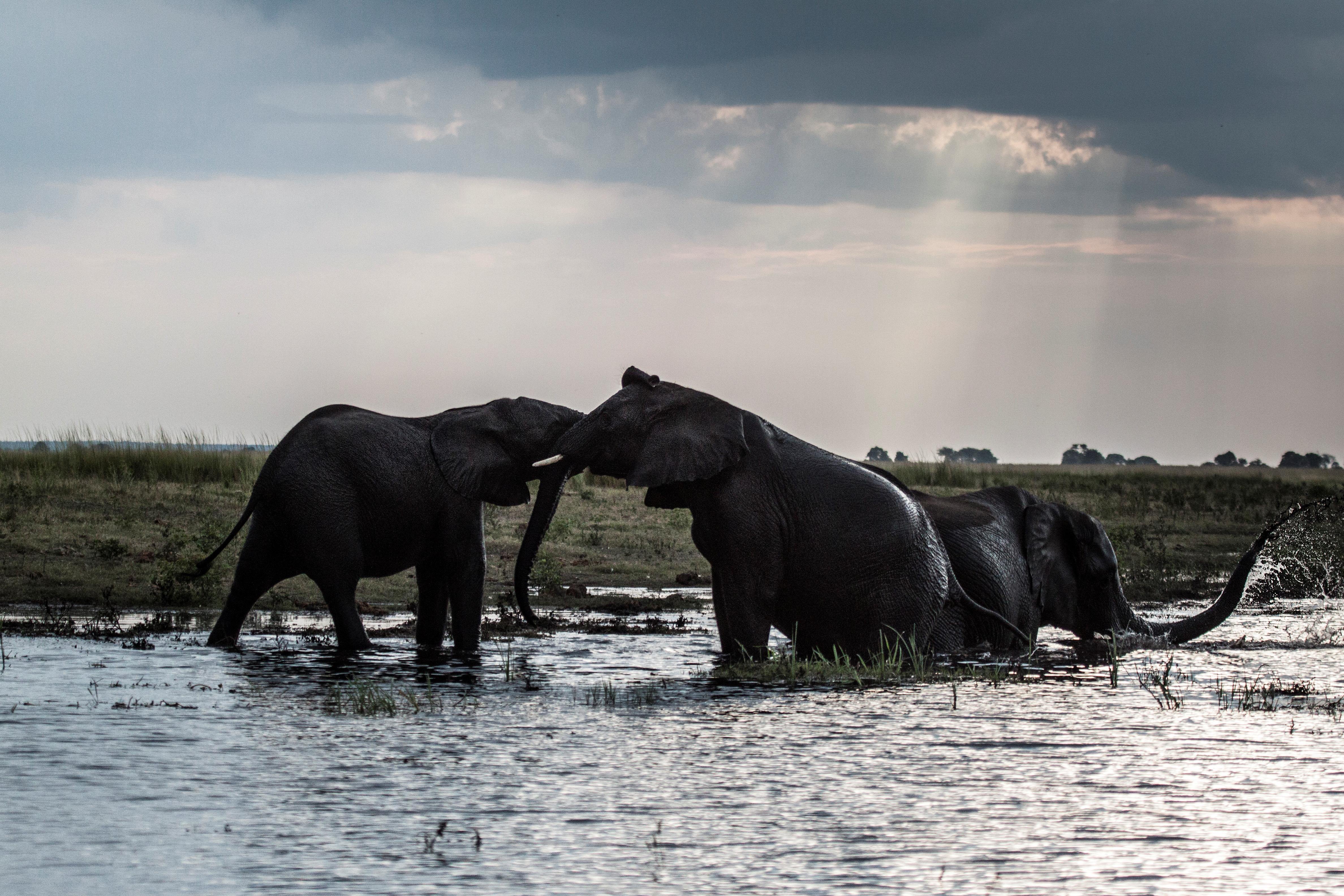 Elefantes en Botsuana | Chris Jek | Agence France-Presse